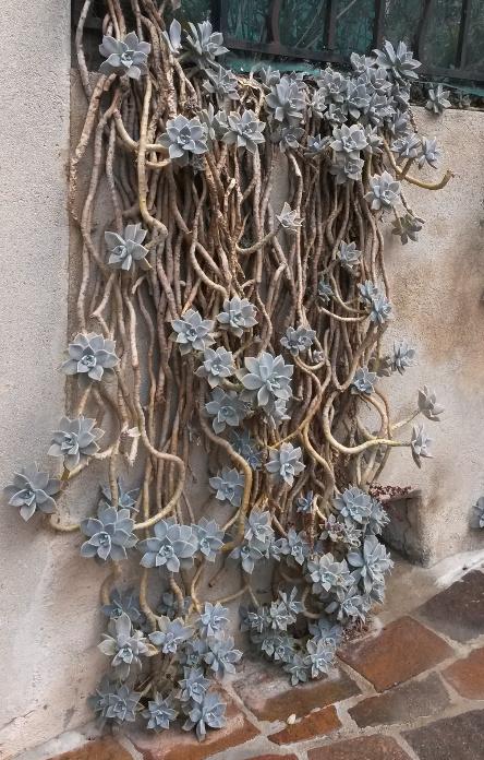 Grasses U S S Botany Bay