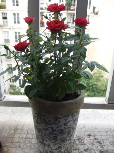 ����� ������ �������� ���.. 20070923_roses.jpg
